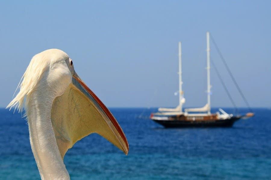 Pelicano Mykonos Petros